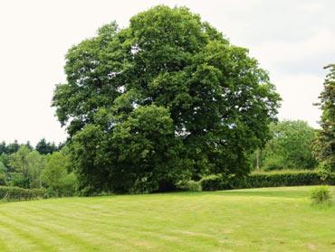 cs-tree-surgery-370x279