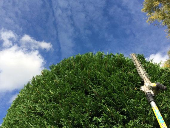 tree-surgery-landing-page