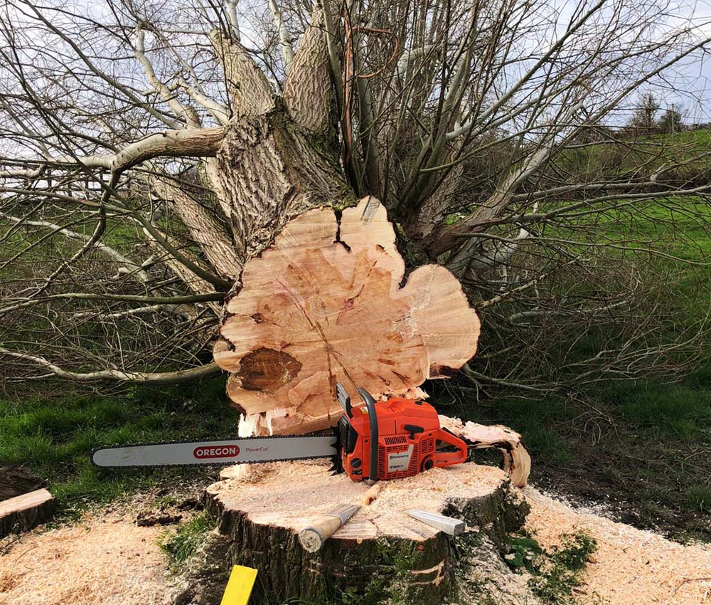 tree surgeon gloucestershire